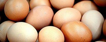 Salmonellen-Gefahr in Bio-Eiern