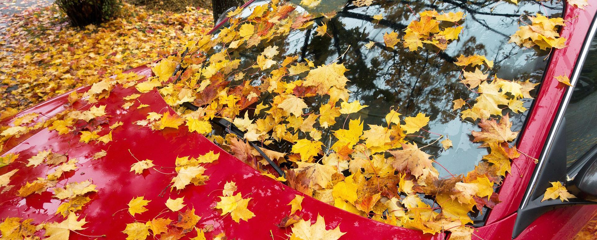 Jäckels Waschpark Rheinland: Autowäsche im Herbst und Winter