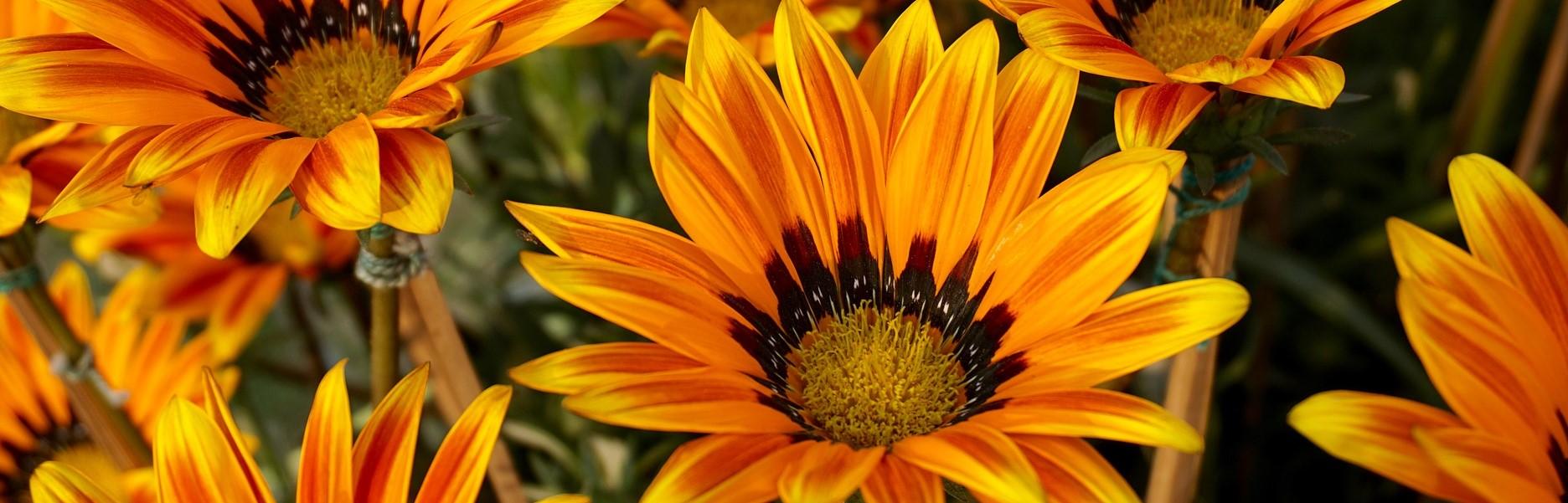 Blumen_Pexels-auf-pixabayJCeHZ8iqmyIzP
