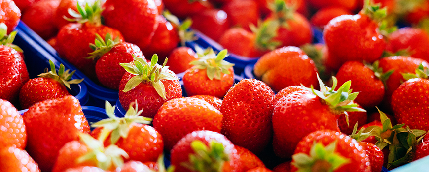 NaturHof Hilden: Erlesene Erdbeeren