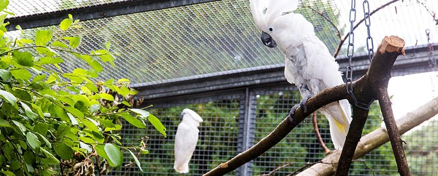 """Hier piept's wohl!"" Solinger Vogel- und Tierpark freut sich über Neuankömmlinge"