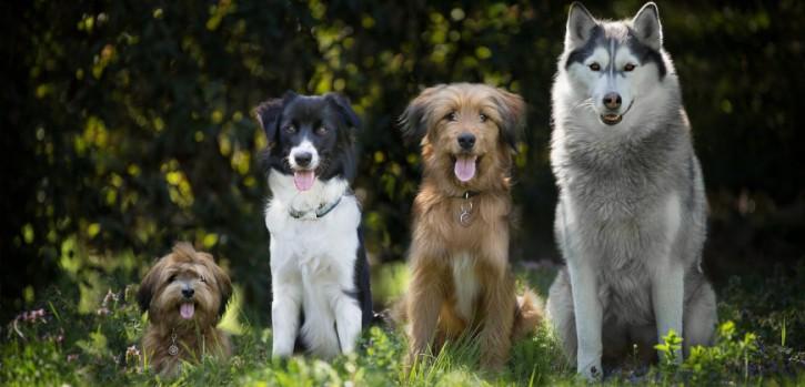 Hundesteuer-Einnahmen: Wieviel verdient die Stadt?