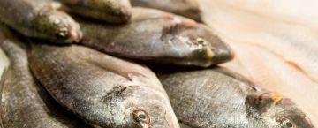 Schälte's Fisch-Kochkurse