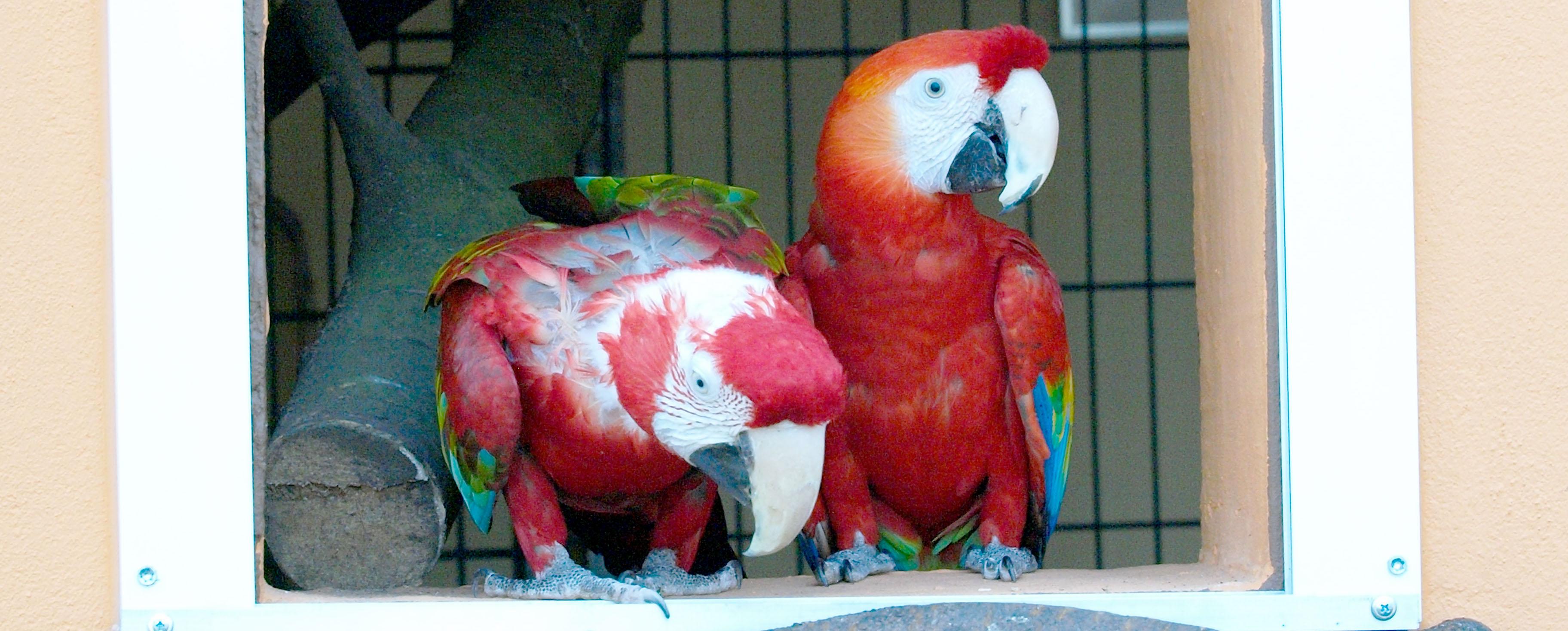 Solinger Vogelpark: Die Ara-Anlage ist fertig