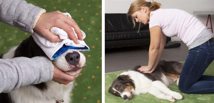 Erste Hilfe am Hund - beim ASB Kreis Mettmann