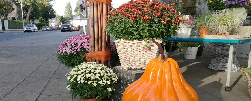 Herbstzeit im Pflanzenmarkt Hosse-Quartuor