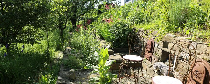Wildbienen, Pflanzen und grüne Leckereien