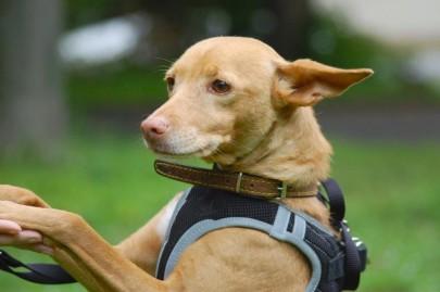 Notfell Lluvia ist ein echter Hundeschatz