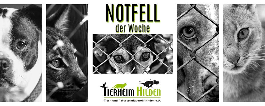 Tierheim Hilden: Notfell der Woche