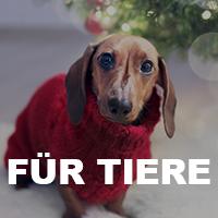 Geschenke für Haustiere zu Weihnachten