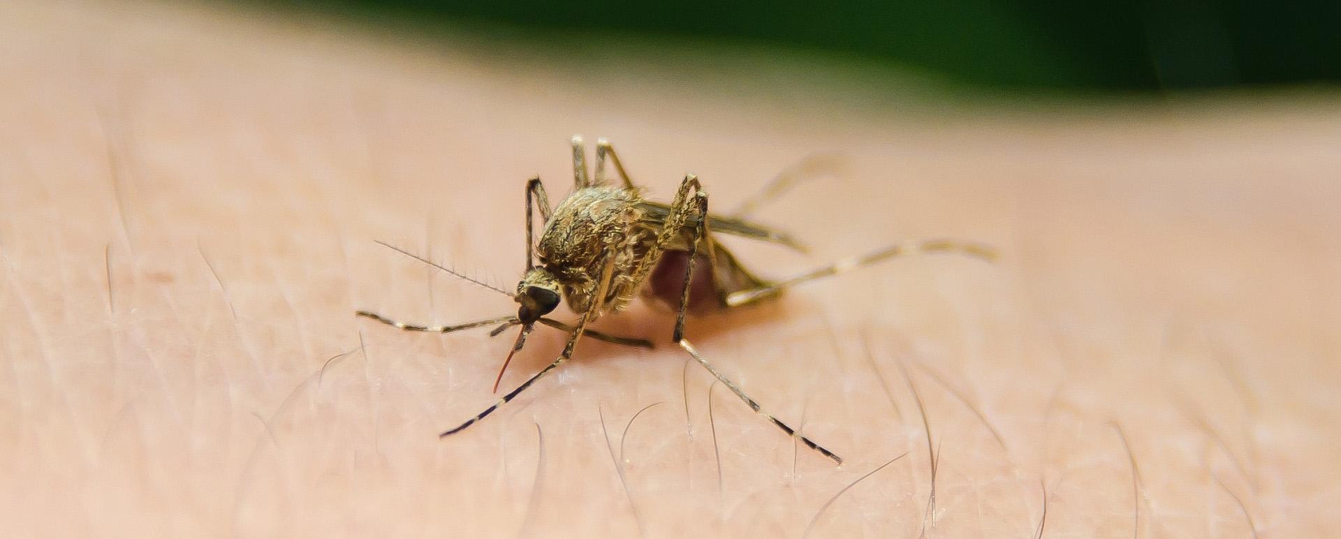 Was tun bei Insektenstichen? Beethoven Apotheke gibt Tipps
