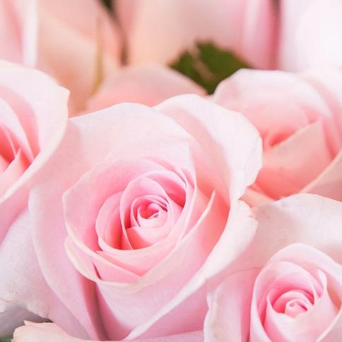 Blumen Merkelbach
